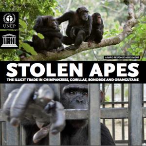 Stolen Apes report