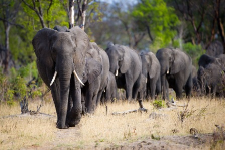 elephants-hwange-national-park